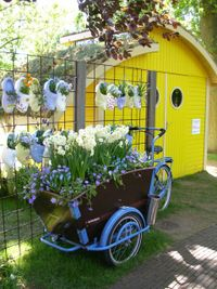 Keukenhof 2008 blue bike and yellow shed