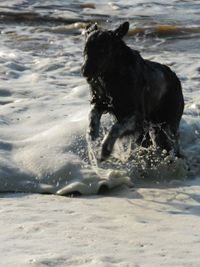 Lily running in sea